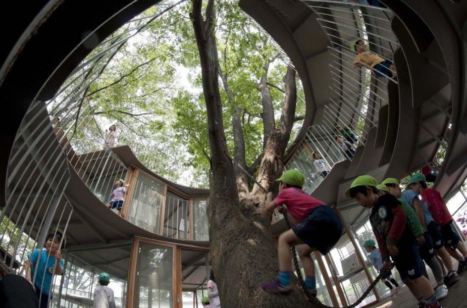 Japonijoje pastatytas darželis aplink medį