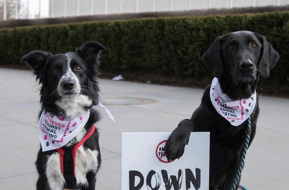 Protestas dėl bandymų su gyvūnais