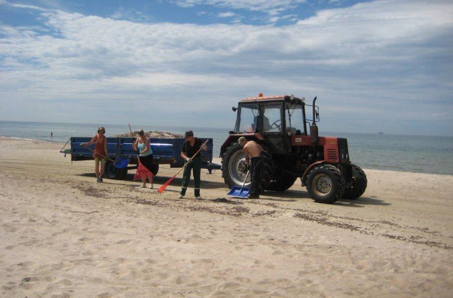 Traktorius pajūryje