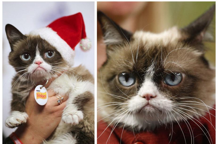 Katinas Grumpy