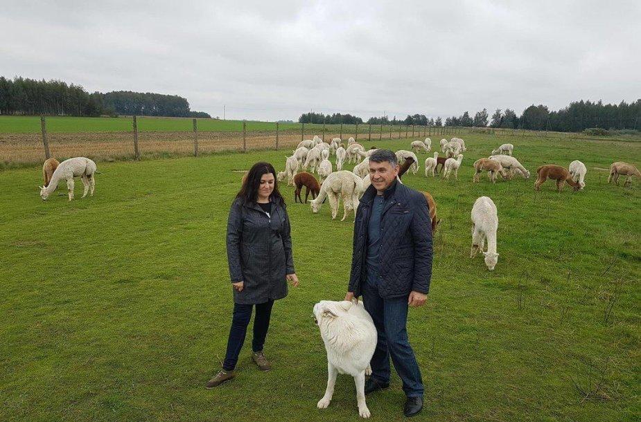 Gritos ir Kęstučio Vitkauskų alpakų ūkis