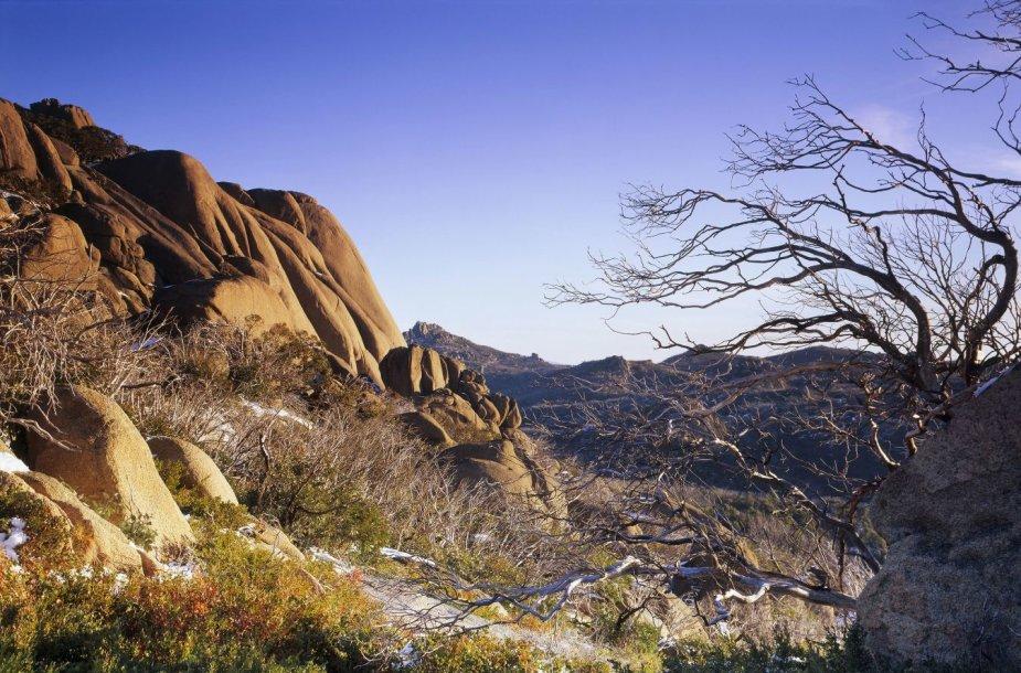 Žydrieji kalnai Australijoje