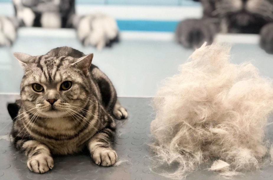 Katė po grožio procedūros