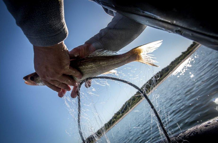 Baltijos jūros žvejų kasdienybė