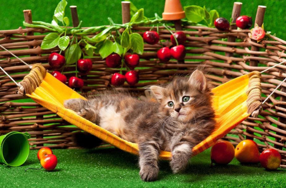 Katino atostogos