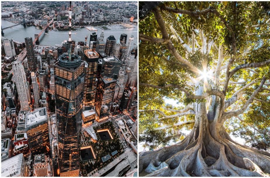 Miestas ir gamta
