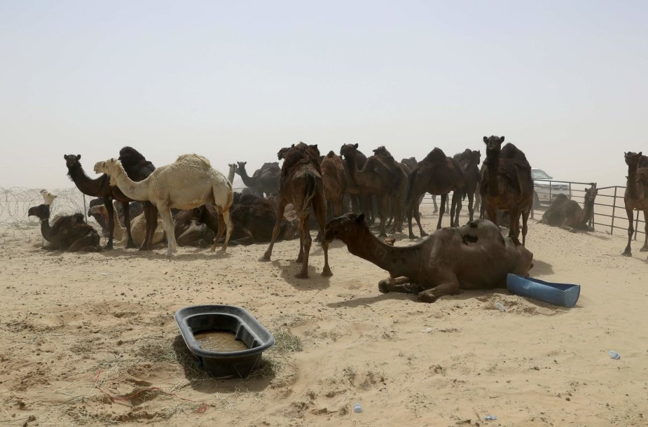Kupranugariai Katare