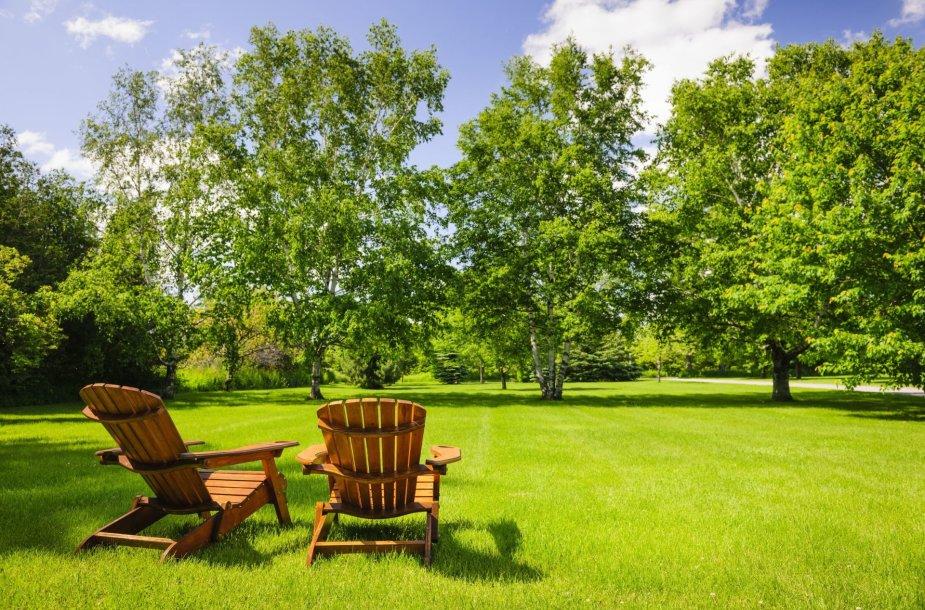 123rf.com nuotr. / Medžiais apsodintas sklypas