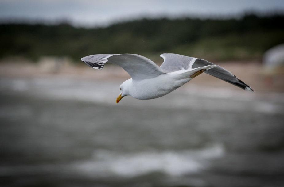 Baltijos jūrą talžo vėjas