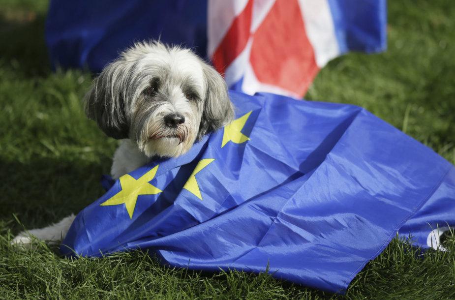 """Tūkstantis šunų su šeimininkais Londone protestavo prieš """"Brexit"""""""