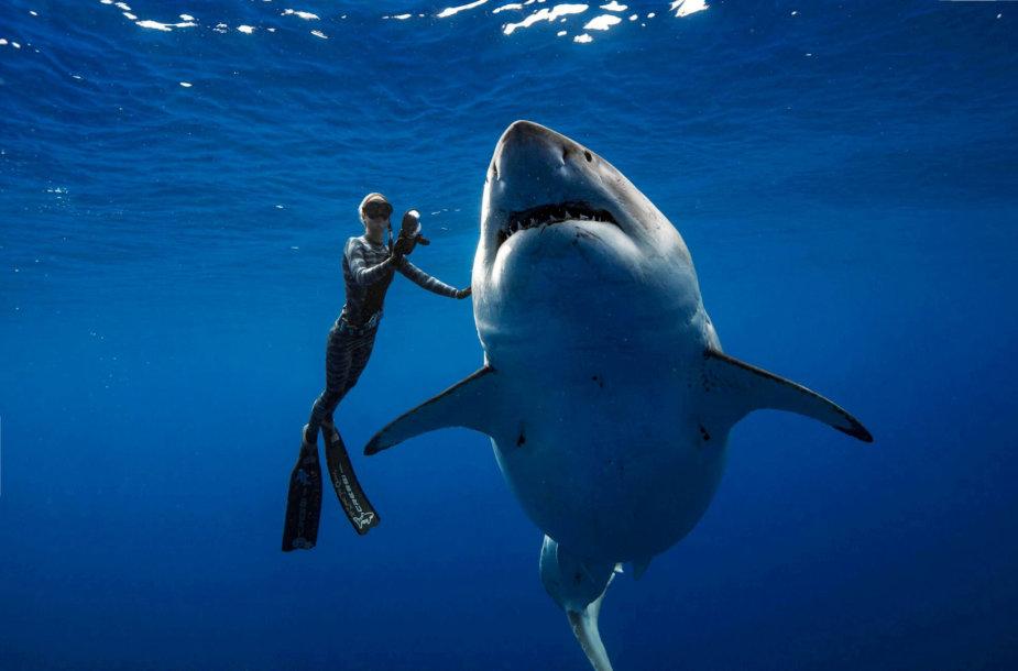 Ryklys Havajų pakrantėje