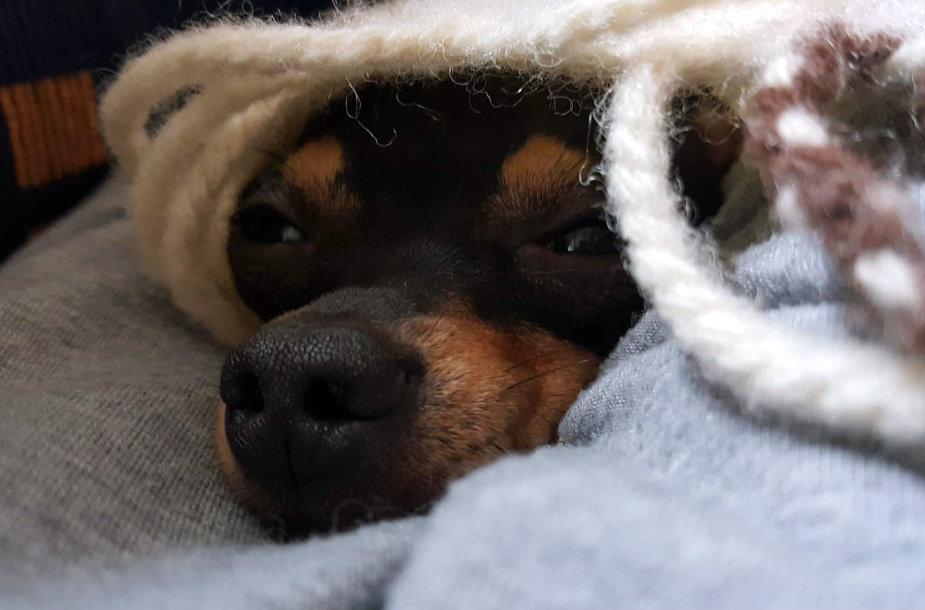 Šuniukas kelionėje