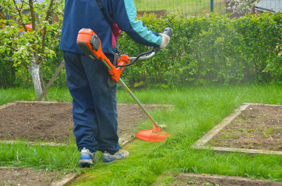 Nupjauti žolę aplink pakeltas lysves akumuliatorine žoliapjove pavyko kruopščiai ir švariai