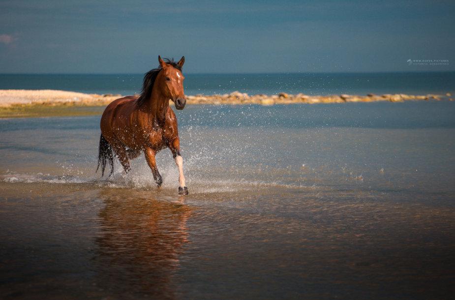 Žirgas jūroje
