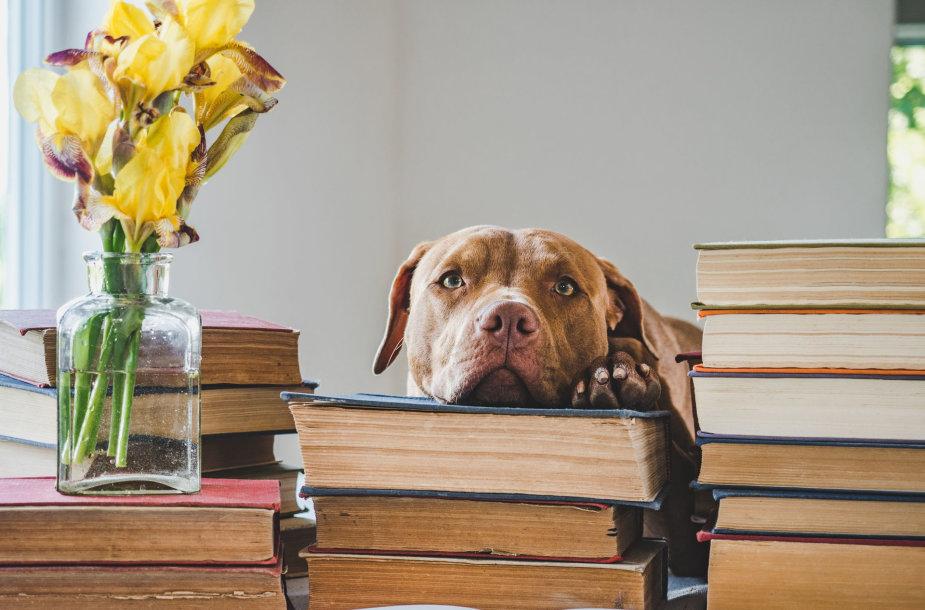 Šuo tarp knygų (asociatyvi nuotr.)