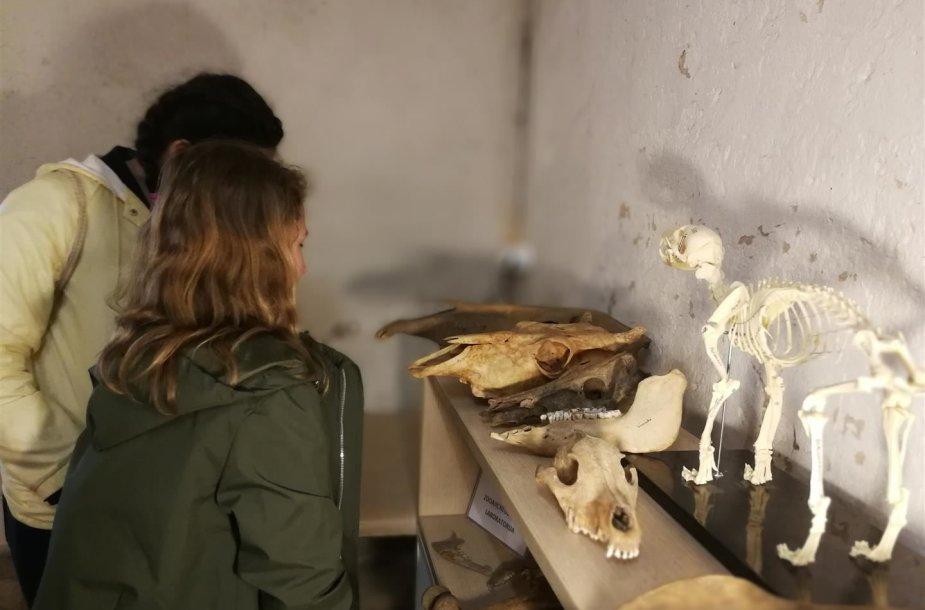 Lankytojai apžiūri archeologinius radinius (E. Daukšaitės nuotr.)