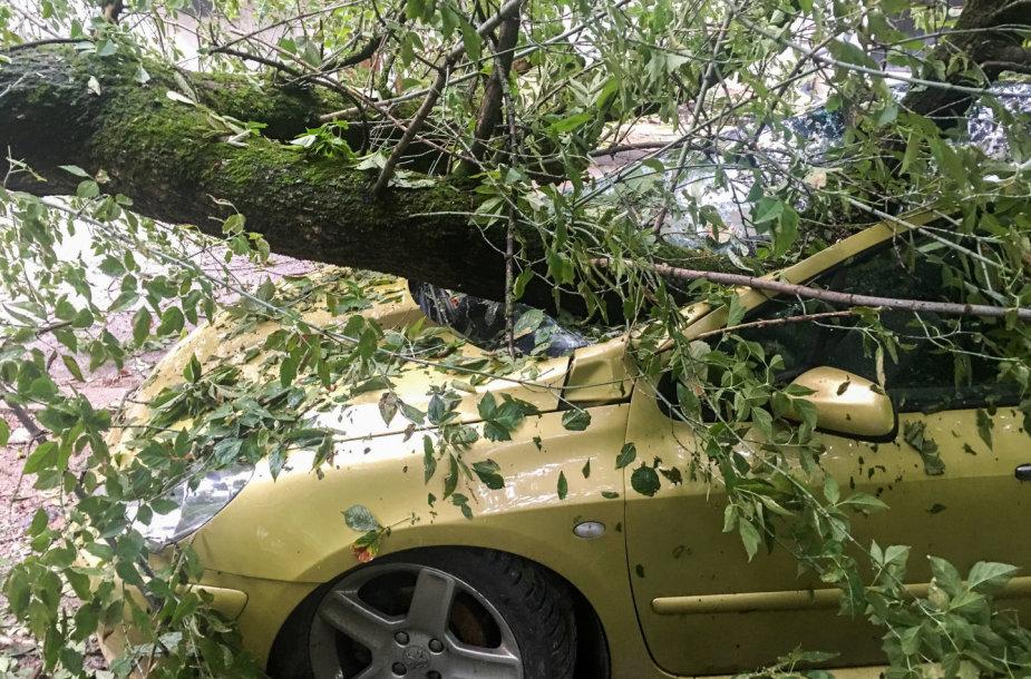 Nuvirtęs medis Vienuolio gatvėje