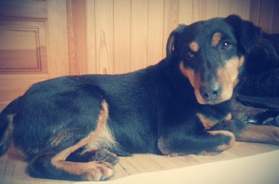 Palangoje rastas šuo