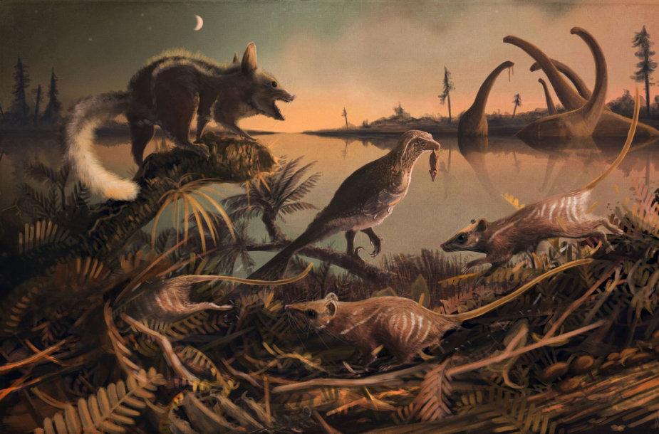 Manoma, kad šis žmonių protėvis galėjo būti panašus į kirstuką