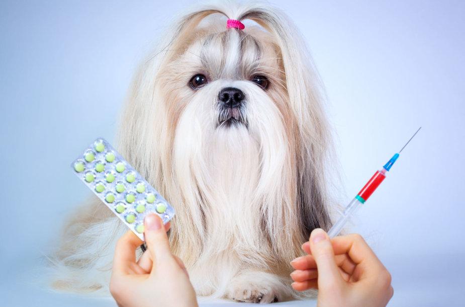 Susirgęs šuo