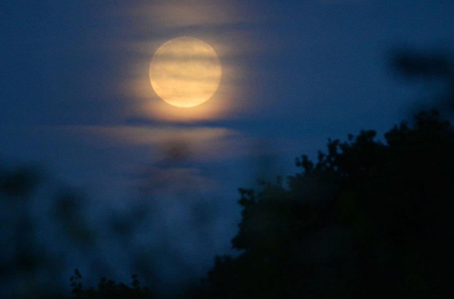 """""""Braškinė"""" Mėnulio pilnatis"""