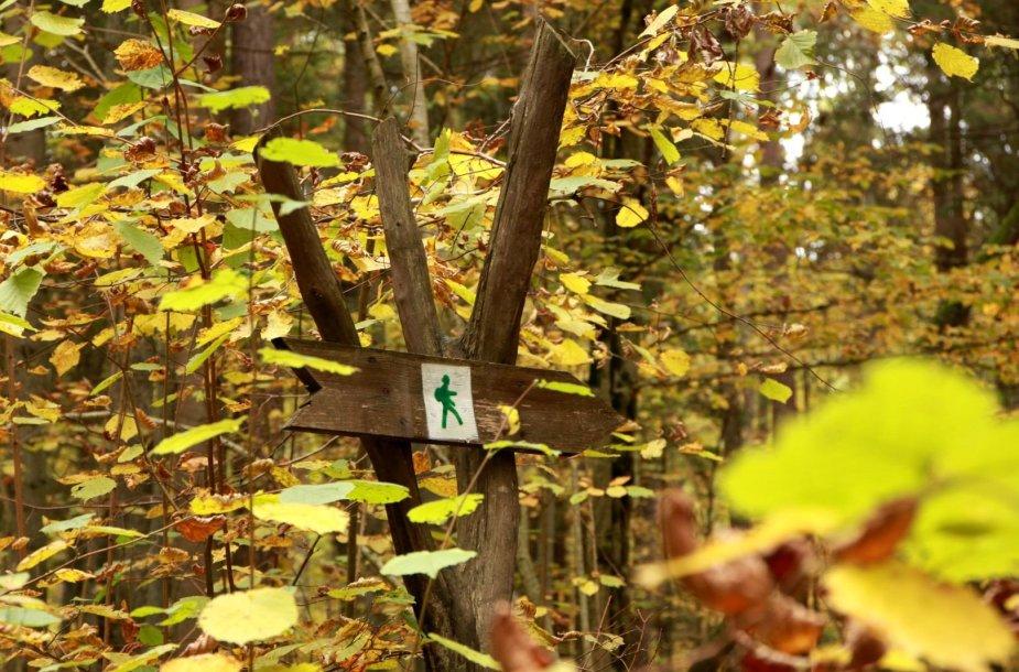 Trako miško gamtos pažinimo takas