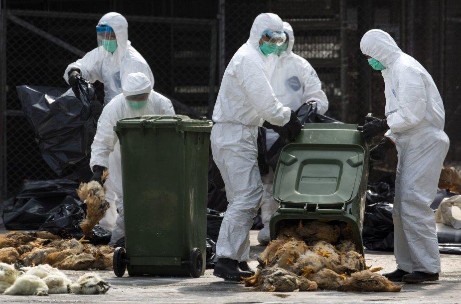 Honnkonge dėl paukščių gripo masiškai skerdžiami viščiukai.