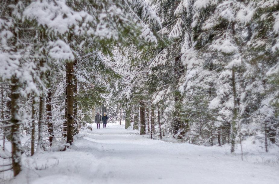 Žiemos vaizdai Kleboniškio miško parke