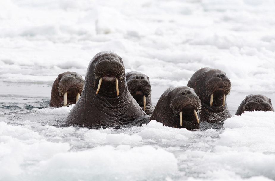 Jūrų vėpliai