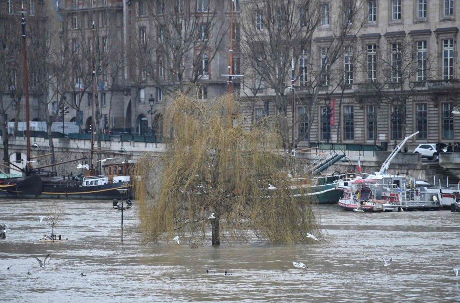 Patvinusi Senos upė Paryžiuje