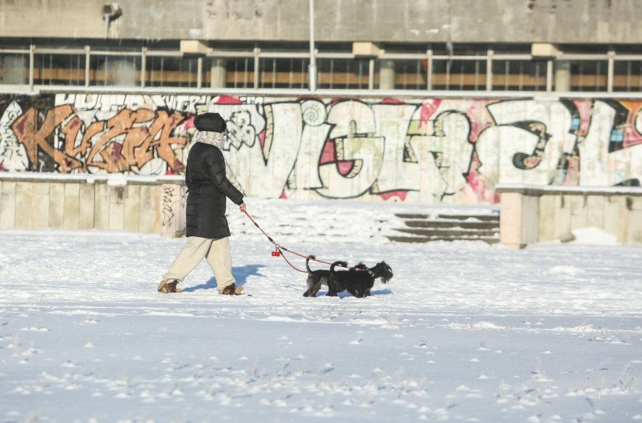 Šalčio raštai Vilniaus gatvėse
