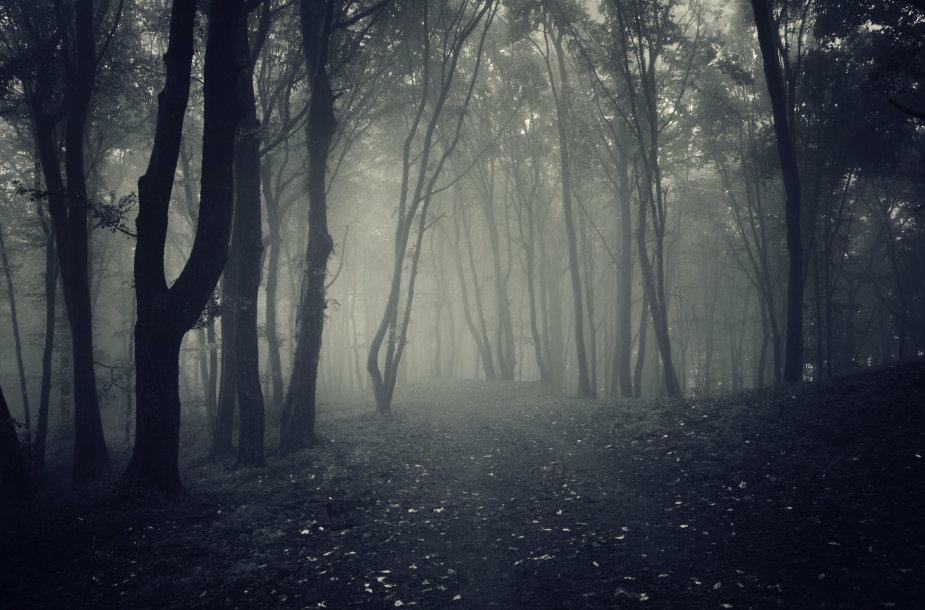 Miškas naktį