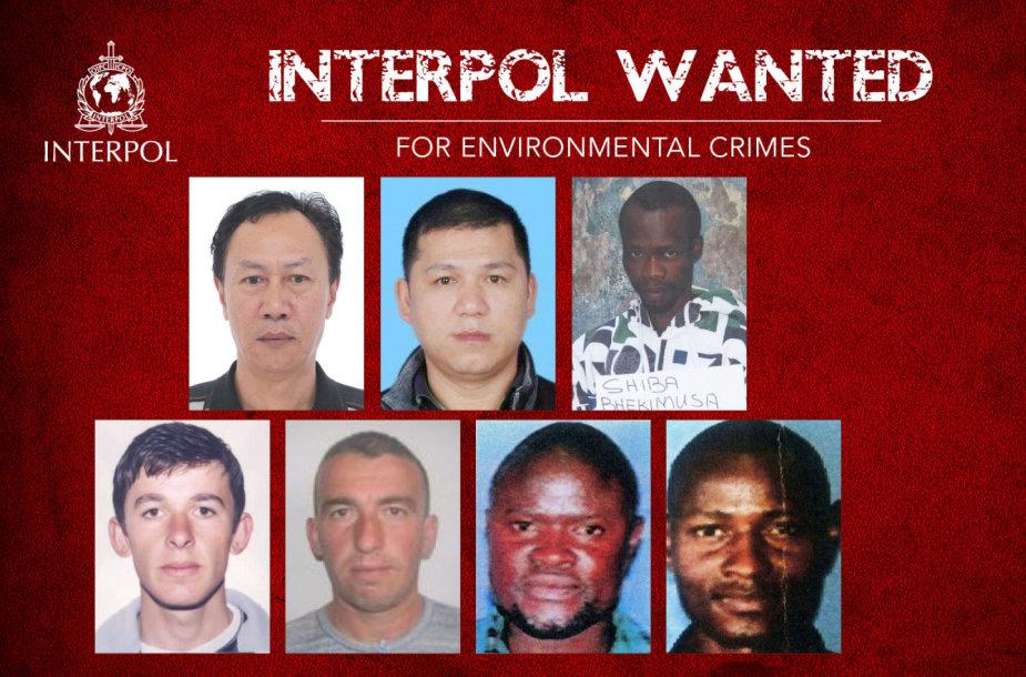Interpolas paskelbė ieškantis septynių asmenų, įtariamų aplinkosaugos nusikaltimais