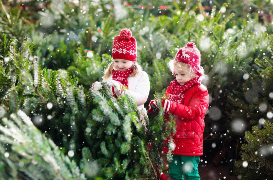 Šeima renkasi Kalėdų eglutę