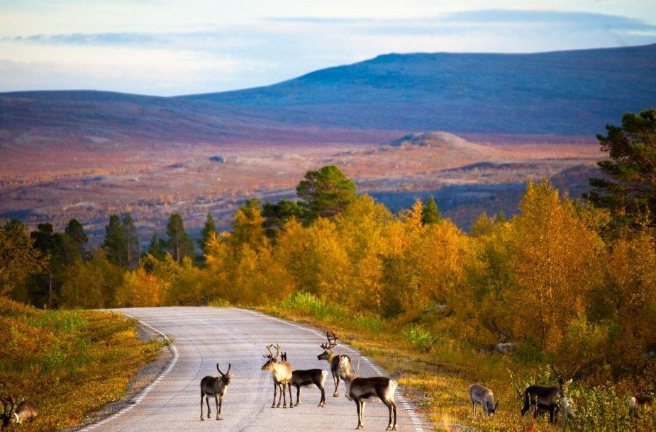 Suomija rudenį