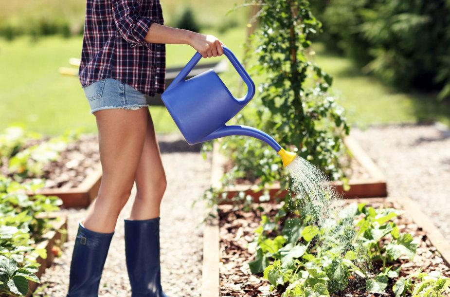 Mergina laisto daržą