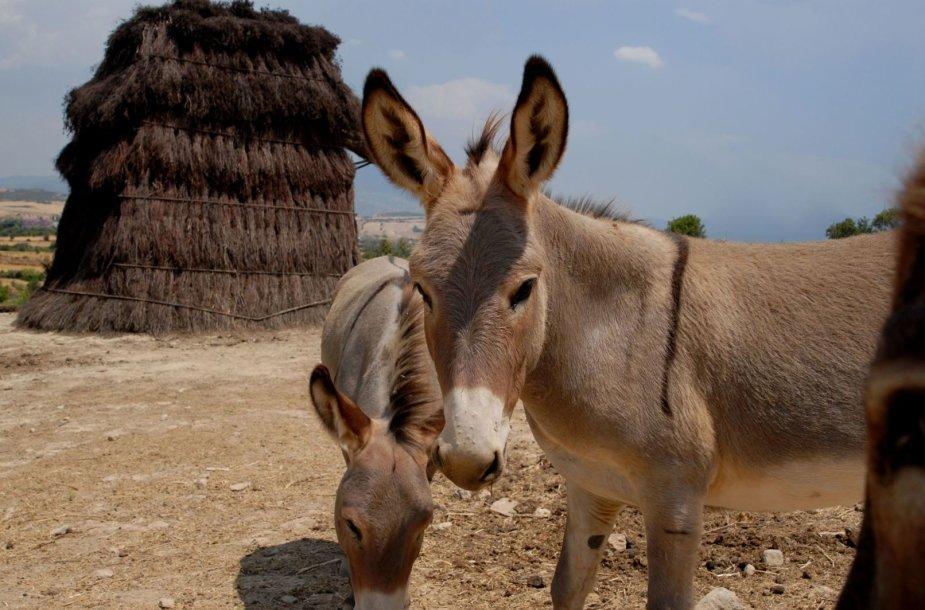 Sardinijos gyvūnai