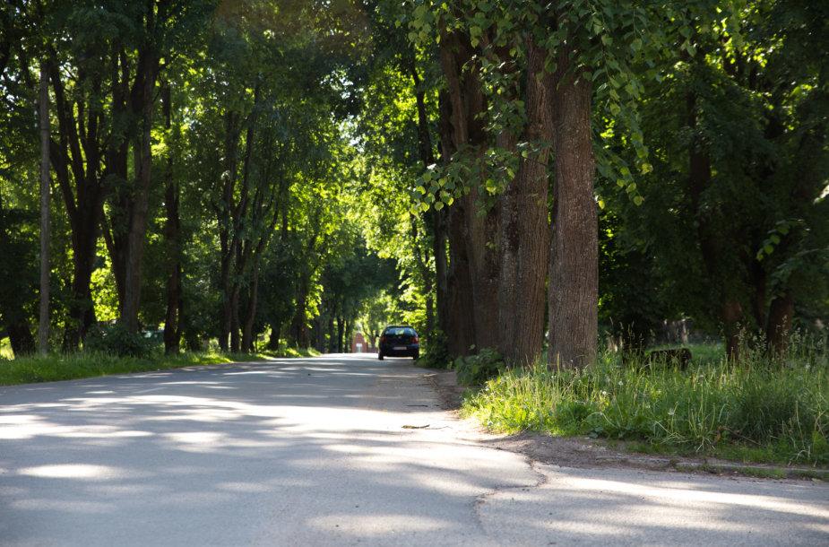 Plento gatvė
