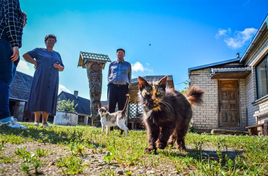 Urėdijų gūžta Katinų kaime: kur įsikurs Lietuvos miškų smegenys