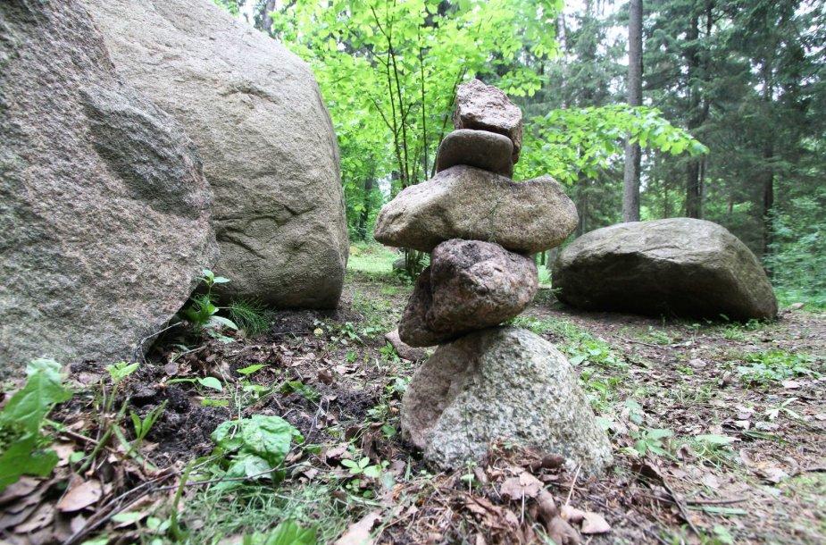Akmenų rūža Tytuvėnų regioniniame parke