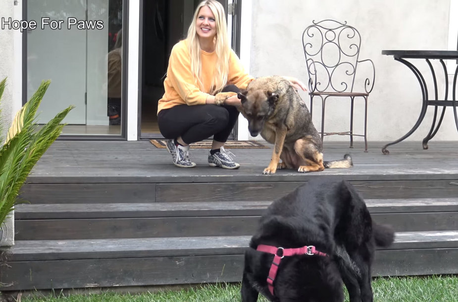 Loreta Frankonytė gelbsti išsigandusį šunį