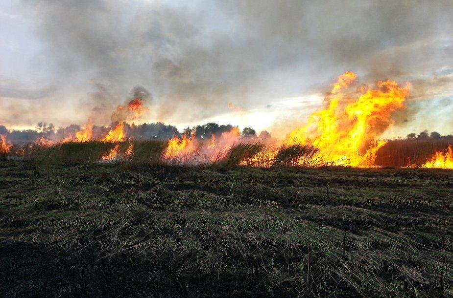 Asociatyvinė iliustracija: deganti žolė