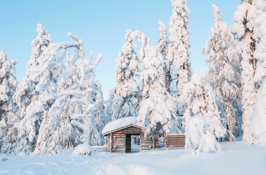 Užšalęs miškas Risitunturio nacionaliniame parke Suomijoje