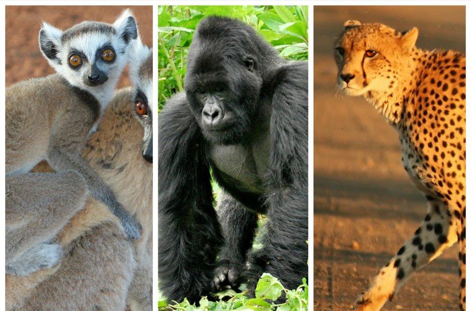 Afrikos gyvūnai