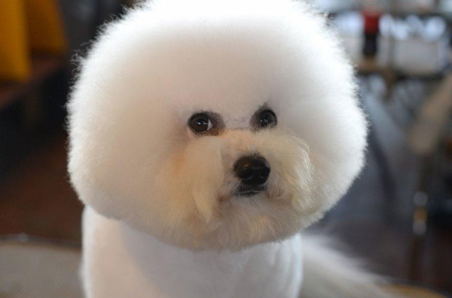 Vestminsterio šunų paroda