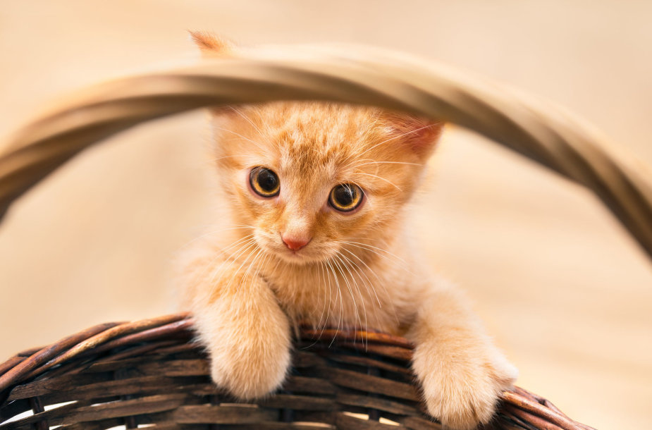Katinukas