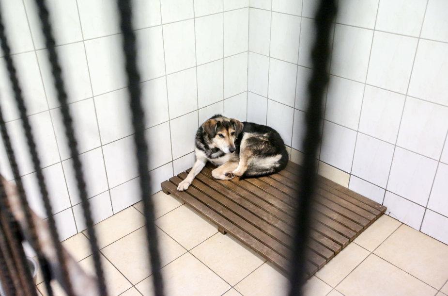 Beglobiai gyvūnai Vilniaus gyvūnų globos namuose