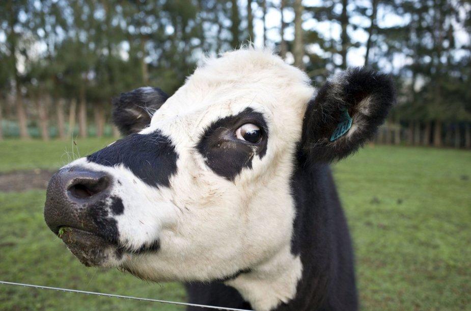 Karvė