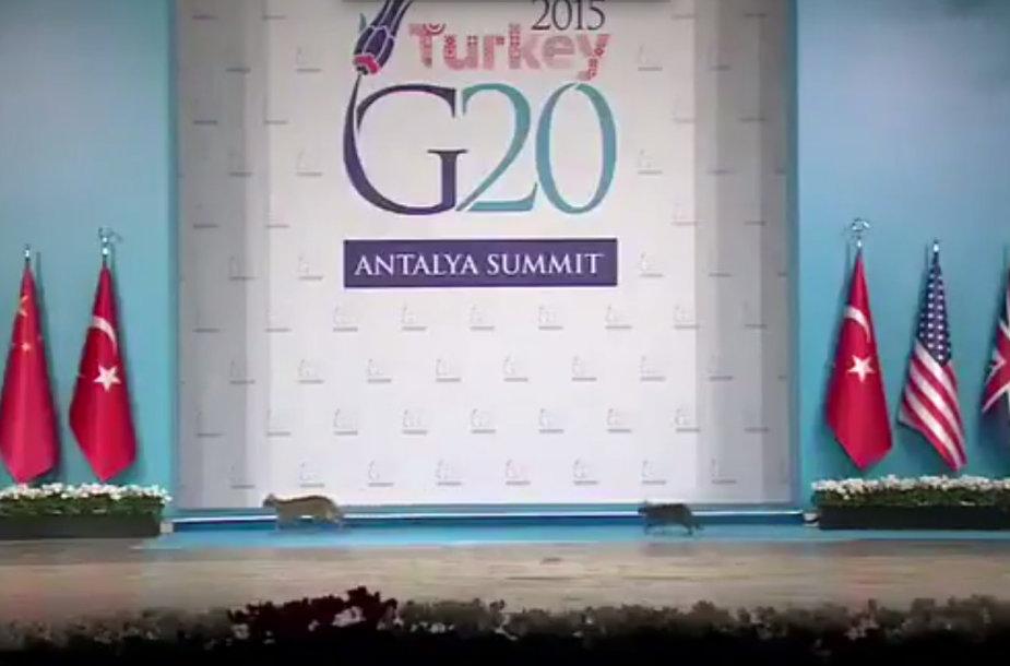 Katės G-20 šalių vadovų suvažiavime Turikijoje