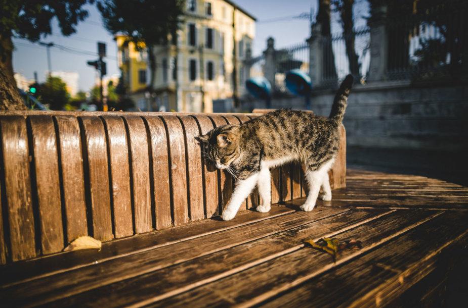 Katė džiaugiasi saule